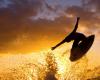 SUNSET COAST SURF