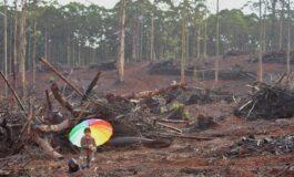 SAVE WA FORESTS